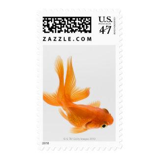 Goldfish de la cola de milano (auratus del sellos