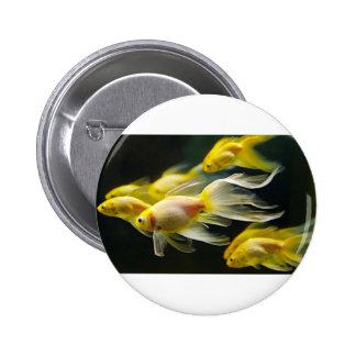 Goldfish de lujo amarillo del acuario chapa redonda 5 cm