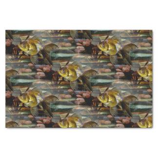 Goldfish de lujo de la cola de milano papel de seda pequeño