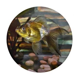 Goldfish de lujo de la cola de milano paquete pequeño de tapa botones