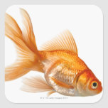 Goldfish de lujo pegatina cuadrada