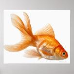 Goldfish de lujo posters