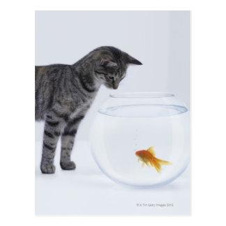Goldfish de observación del gato curioso en tarjetas postales