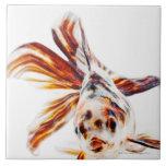 Goldfish del cometa de la cola de milano del calic azulejo cuadrado grande