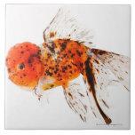 Goldfish del lionhead del calicó (auratus del Cara Azulejo Cuadrado Grande