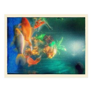 Goldfish Dream Postcard