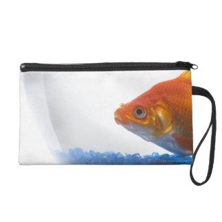 Goldfish en cuenco en el fondo blanco