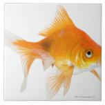 Goldfish en el fondo blanco azulejo cuadrado grande