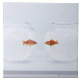 Goldfish en los fishbowls separados que miran la c azulejo cuadrado grande