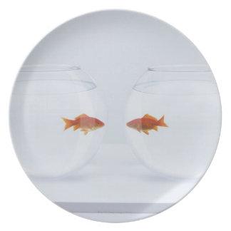 Goldfish en los fishbowls separados que miran la c platos