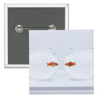 Goldfish en los fishbowls separados que miran la pin cuadrado