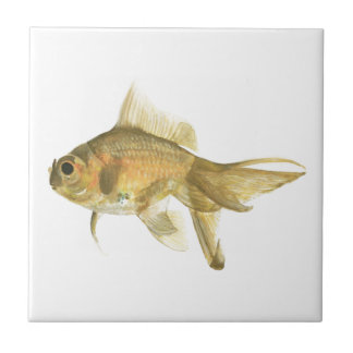 goldfish, fish ceramic tile