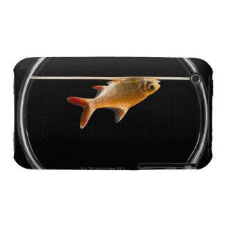 Goldfish in bowl 2 iPhone 3 cover