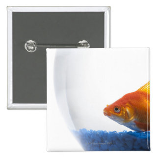 Goldfish in bowl on white background 2 inch square button