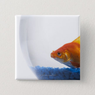 Goldfish in bowl on white background button