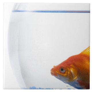 Goldfish in bowl on white background ceramic tile