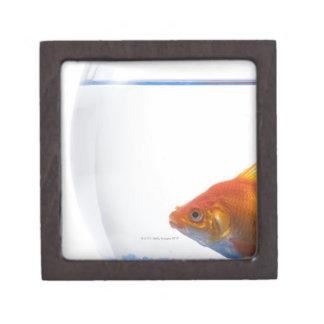 Goldfish in bowl on white background gift box