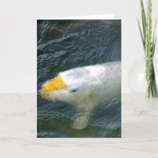 Goldfish In Lake Card