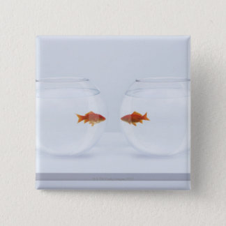 Goldfish in separate fishbowls looking face to fac pinback button