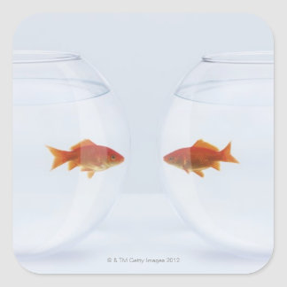 Goldfish in separate fishbowls looking face to square sticker