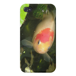 Goldfish  iPhone 4/4S cover