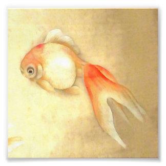 Goldfish japonés fotografía