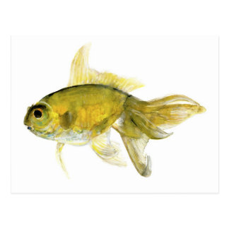 goldfish.jpg tarjetas postales