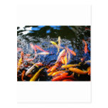 Goldfish Kona Hawaii de Koi Postales