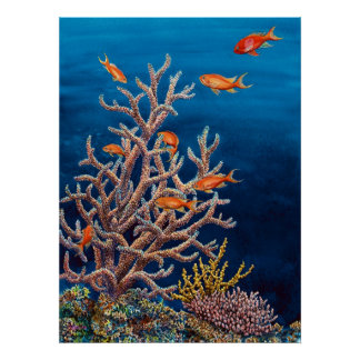 Goldfish of the Sea Poster