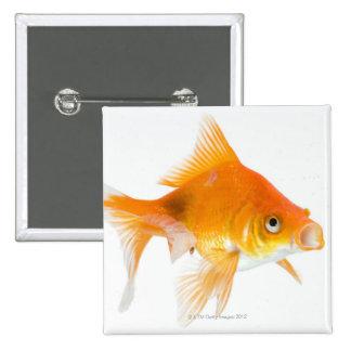Goldfish on white background pinback button