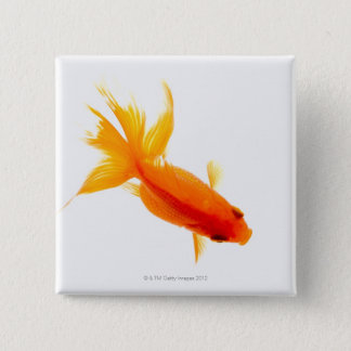 Goldfish, overhead view pinback button