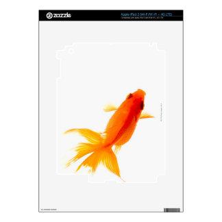 Goldfish, overhead view skins for iPad 3