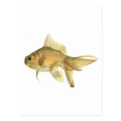 goldfish, pescado postal