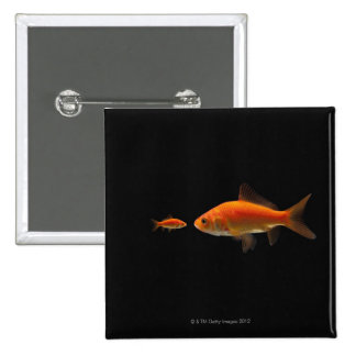 Goldfish Pinback Button