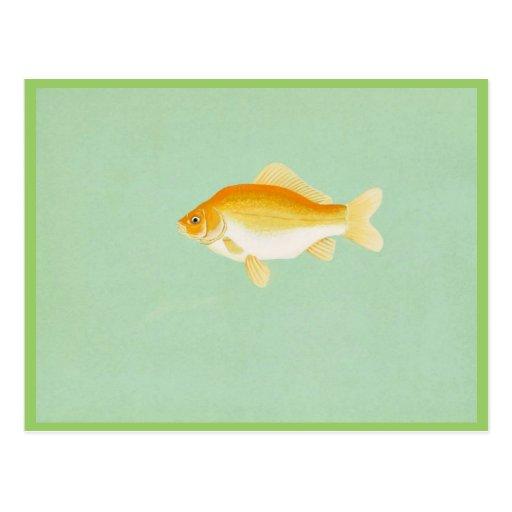 Goldfish Post Cards