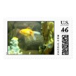 Goldfish Postage Stamp