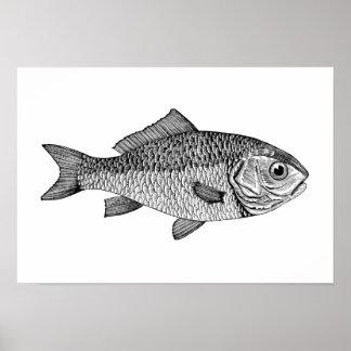 Goldfish Póster