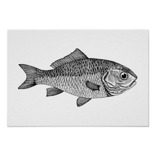 Goldfish Posters