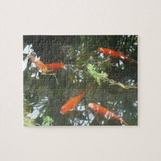 Goldfish Puzzles
