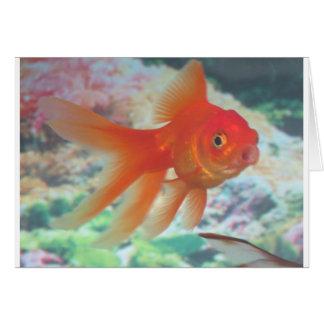 Goldfish que habla tarjeta de felicitación