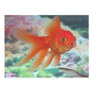 Goldfish que habla tarjeta postal