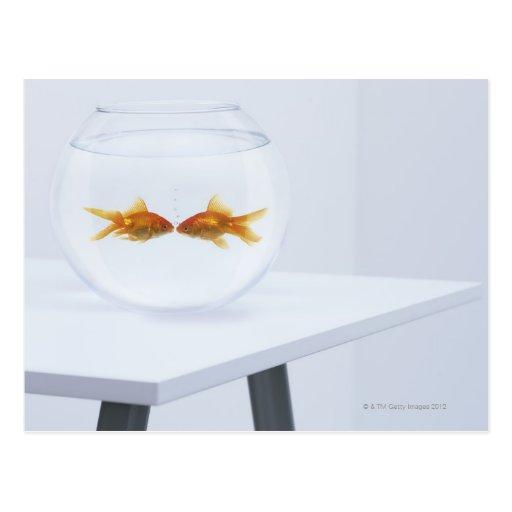 Goldfish que se besa en fishbowl tarjeta postal