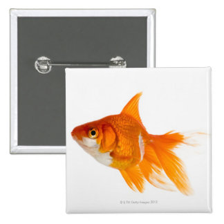 Goldfish, side view button