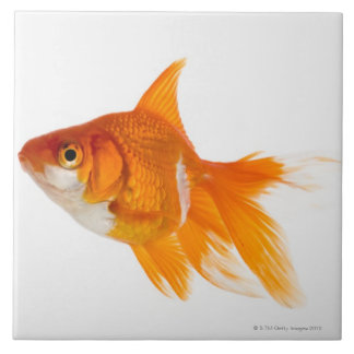 Goldfish, side view large square tile