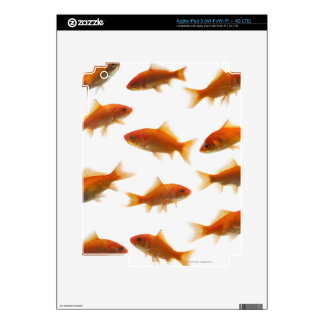 Goldfish Skin For iPad 3