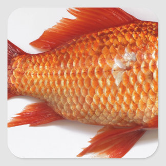 Goldfish Square Sticker