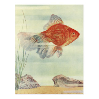 Goldfish T-Shirts, Cards & Gifts!