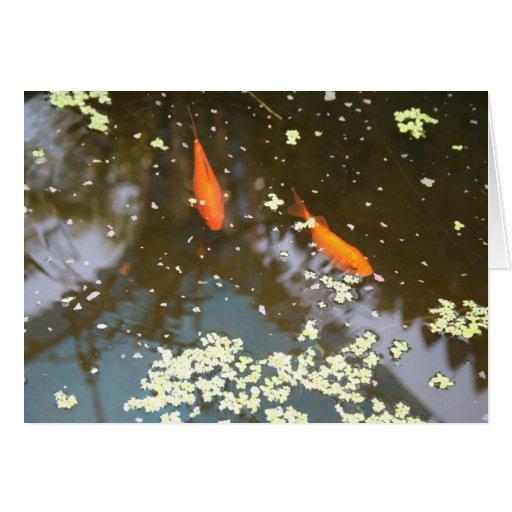 goldfish tarjeta de felicitación