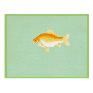 Goldfish Postales