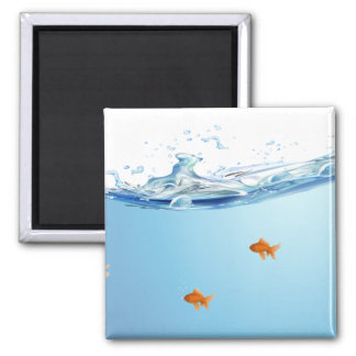 Goldfish under water aquarium magnet